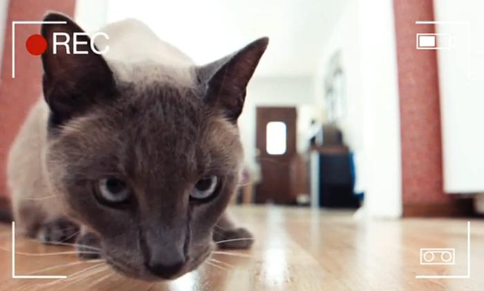 3-seresto-cat-hacks-video-700