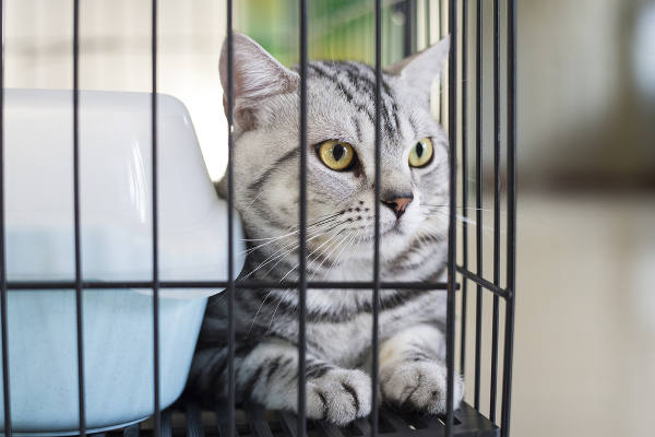 4-cat-in-a-cage-276506456