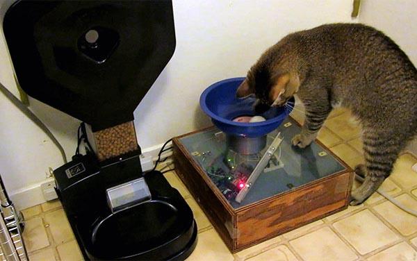 Benjamin Millam's feline feeding machine.