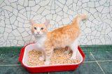 An orange tabby cat in a litter box.