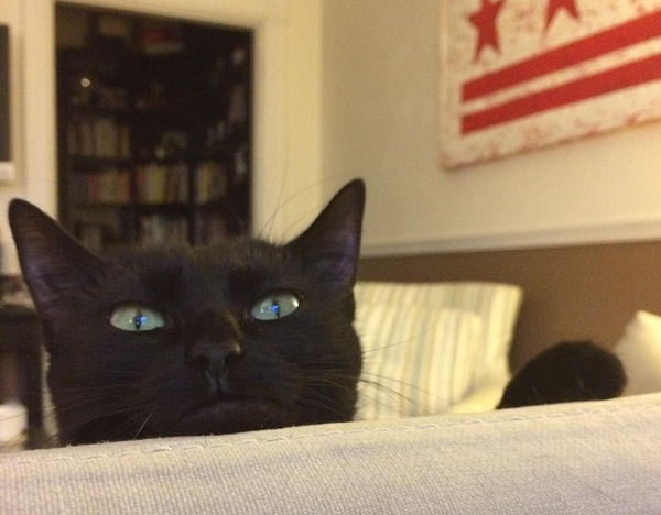 Black cat peeping