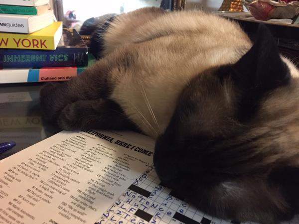 Cat on crossword puzzle