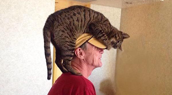 Zombie, hanging out on his favorite person's head. by Kelly Ann Bennett.