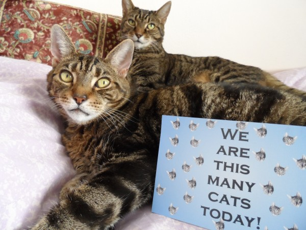 Lugosi and Spider 15th birthday card