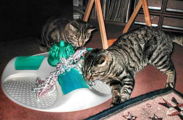 Lugosi and Spider with Cat Spa