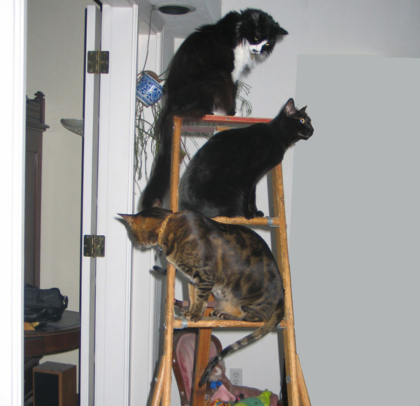 In multi-cat households, where cats perch indicate their status in the changing hierarchy.
