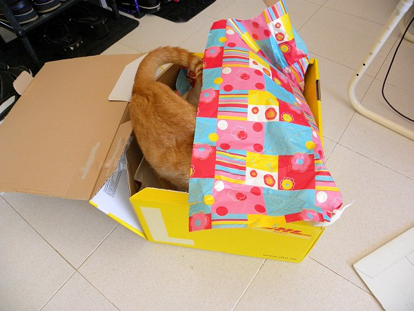 Ruby plays in box