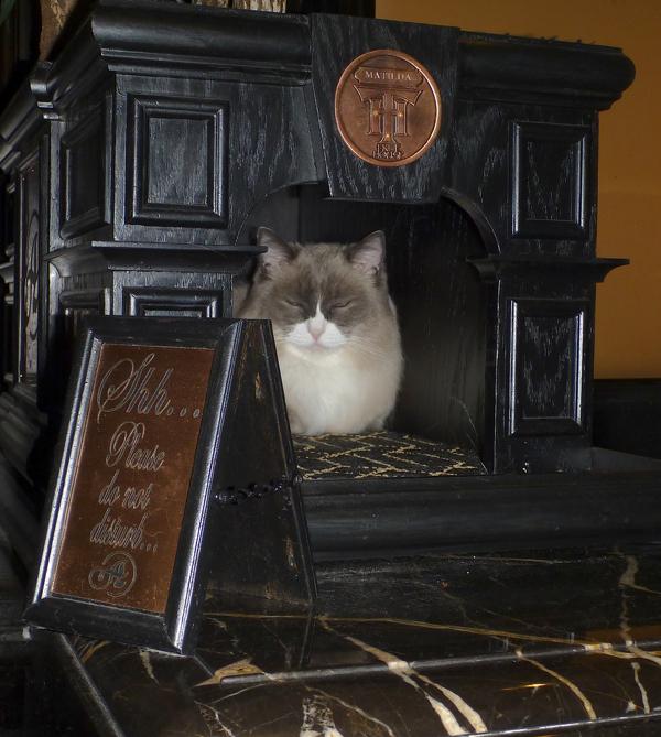 algonquin-matilda-cat-napping