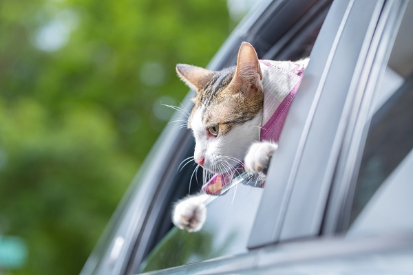 cat-happy-with-her-head-out-car-window-shutterstock_303491738