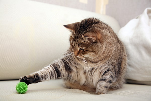 cat-playing-shutterstock_91983428