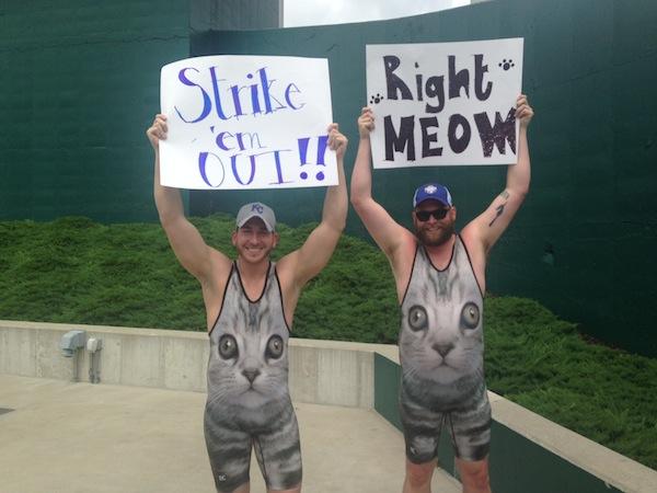 Why Cats Make Great Baseball Fans