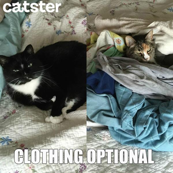 clothing-optional-cat-puns