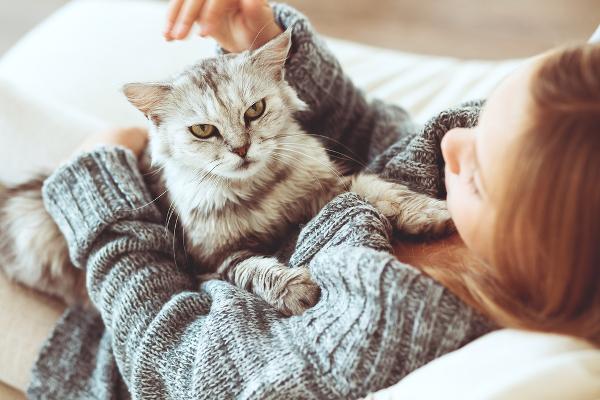 girl-holds-gray-cat