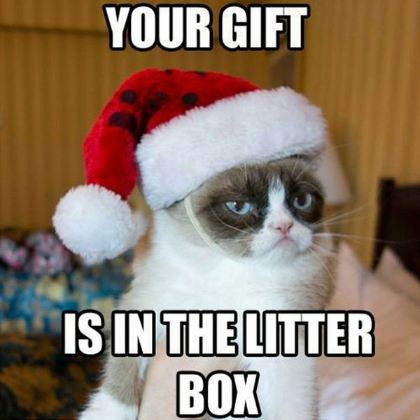 your gift is in the litter box meme posted by clubmanhq