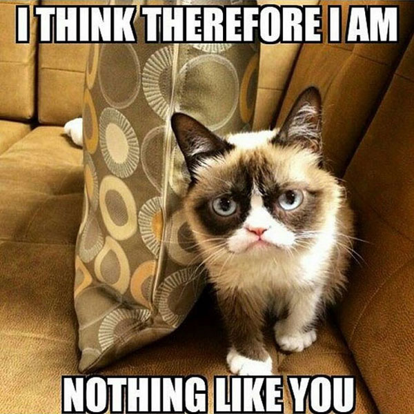 i think therefore i am meme posted by grumpycat_memes13