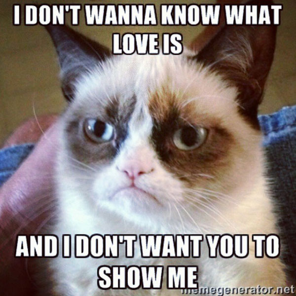 16 of the best grumpy cat memes catster