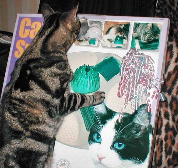 lugosi inspects cat spa