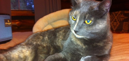 my meditation practice helped transform my cat  catster