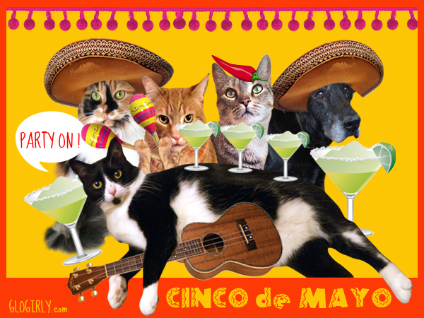 Phil was thrilled with his invitation to Mittens' Cinco de Mayo party last year.