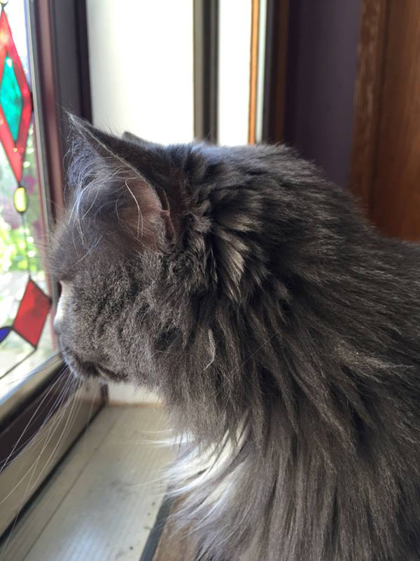 Saffy longingly gazes into the great outdoors.
