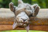 Kitty sleeping by Shutterstock.