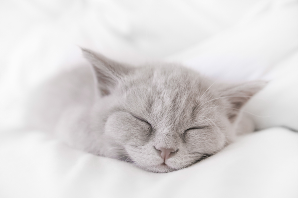 Snoozing kitty by Shutterstock.