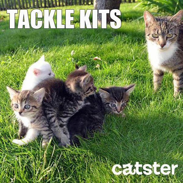 tackle-kits-cat-puns