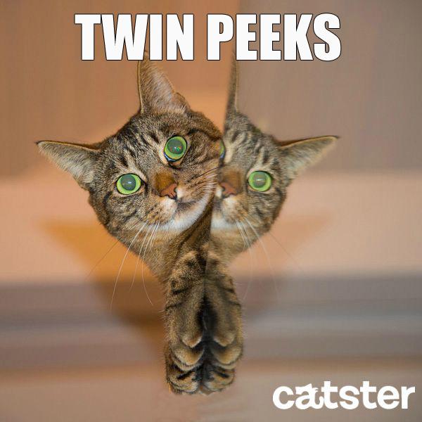 twin-peeks-cat-puns