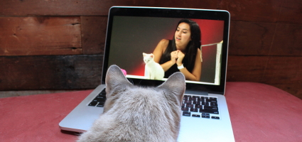 Leila the cat watching cat videos on my laptop