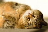 An older tabby cat.