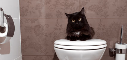 best ways to remove cat urine