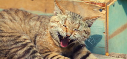 causes for a cat throwing up yellow liquid