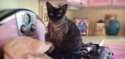 Meet Aleister The Devilishly Dapper Cat Of Dita Von Teese