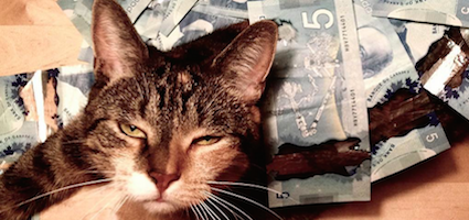 """cash cats"" are showing off mad money on instagram  catster"
