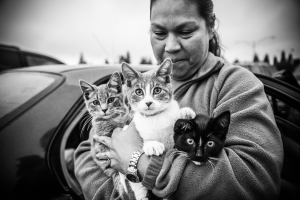 A black and white photo of a woman holding three cats.