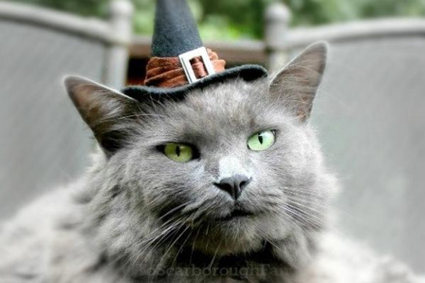 Halloween cat costume.