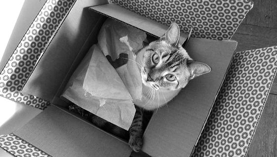 Cat in a box in a box.