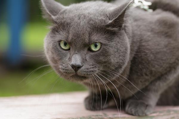 Stressed cats will often spray