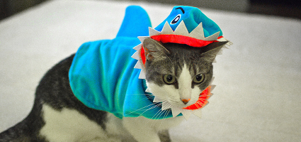 Should People Put Their Cats in Halloween Costumes? & Should People Put Their Cats in Halloween Costumes? - Catster