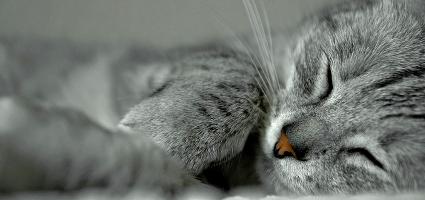 Sedating a cat for vet visits