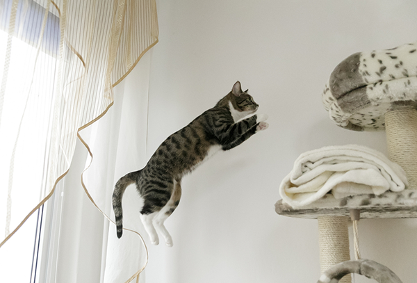 Cat in mid-jump