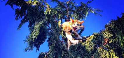 An angry cat in a tree.