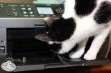 Cat looks inside printer