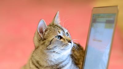 Cat looking at computer screen.