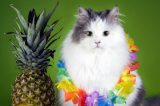 are pineapple leaves poisonous to cats