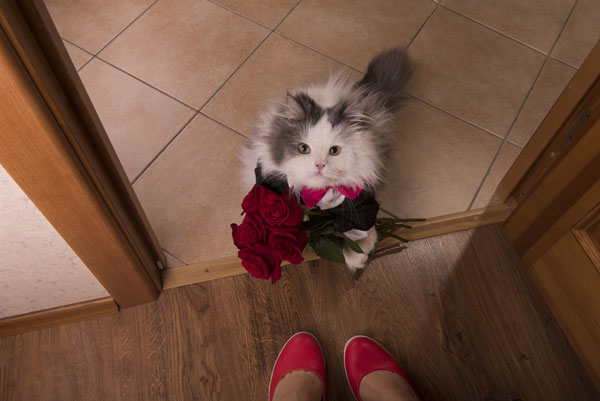 A Valentine's Day cat with flowers.