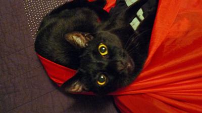 Cat in laundry bag.