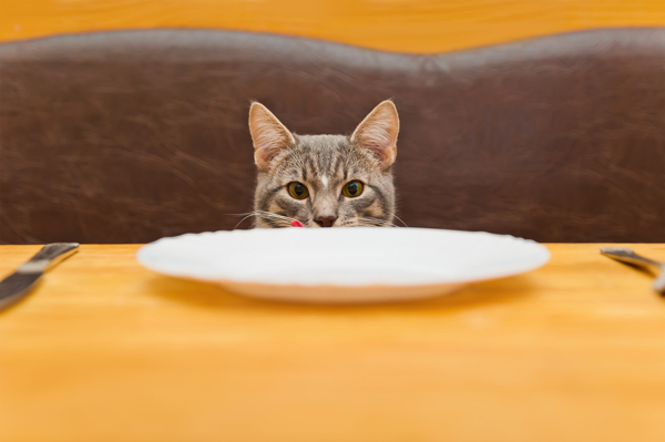 Cat and dinner plate.