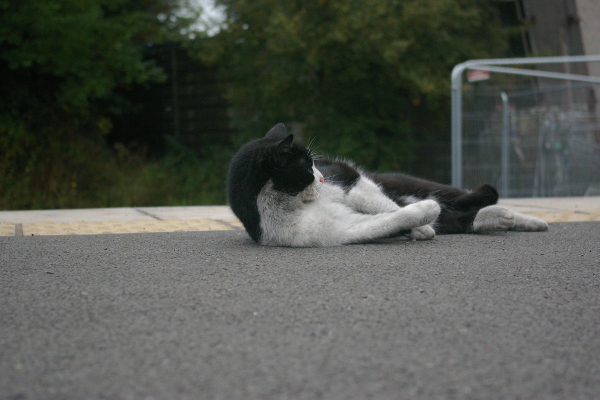 A cat lounging by the side of the road.
