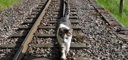 A tabby balancing on railway tracks.